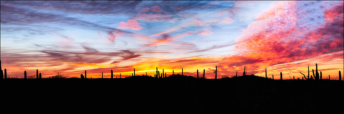 Saguaro cactus sunset panorama